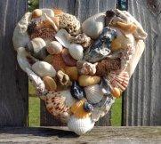 seashellheart